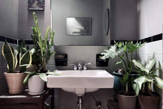 Thiết kế phòng tắm với cây tươi