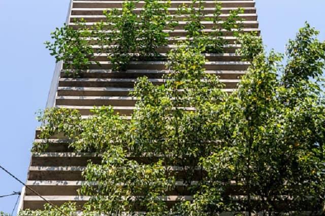 Ngoài việc cho bóng mát, cây xanh còn giúp ngôi nhà của bạn thoáng đãng hơn