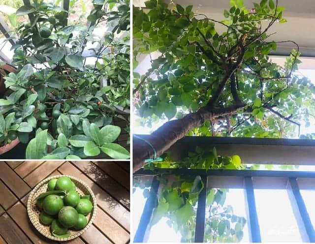 Gia chủ còn tận dụng trồng cây xanh cho ngôi nhà thêm thoáng mát